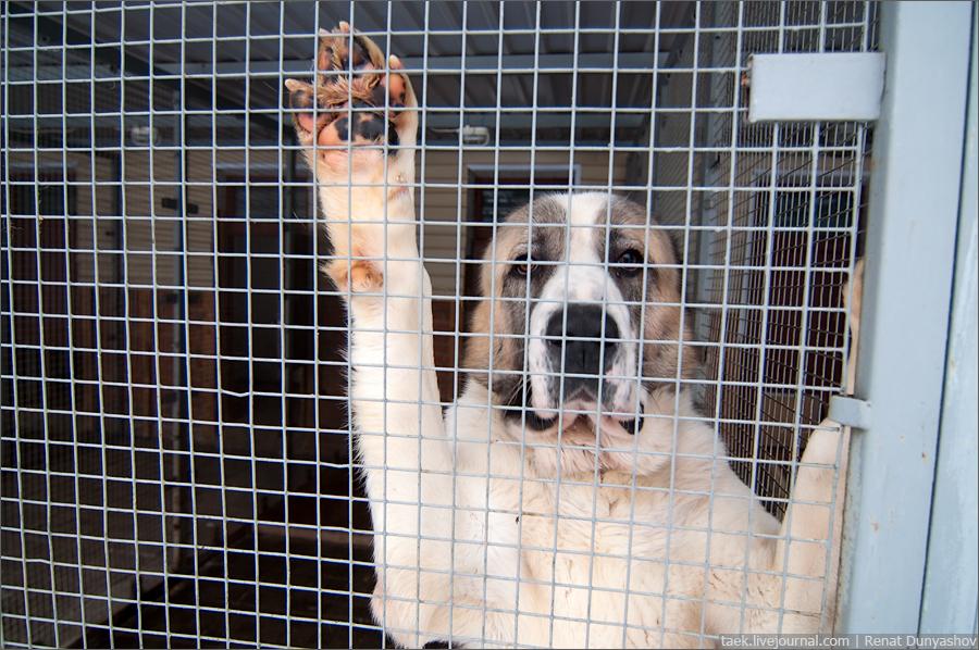 Она отправилась за собакой в приют, но то, что произошло там, было полным сюрпризом!
