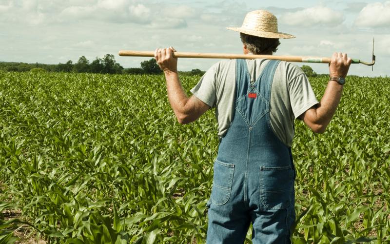 Адвокат и фермер вступили в спор. Но как они это уладили – шок!