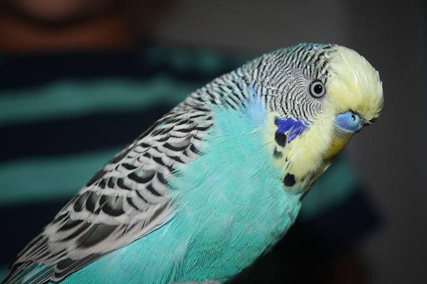 Мастер по ремонту оборудования шокирован, когда приехал на вызов и увидел эту птицу. Это уморительно!