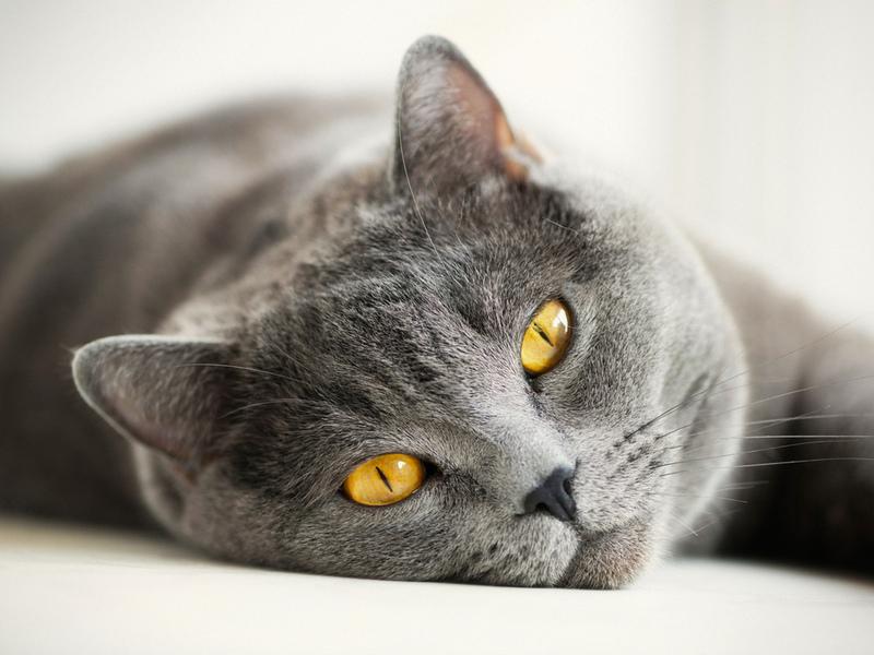 Кот послушал хозяйку и поступил так, как ему сказали!