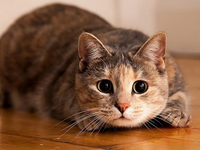 Вот она — настоящая крепкая кошачья дружба!
