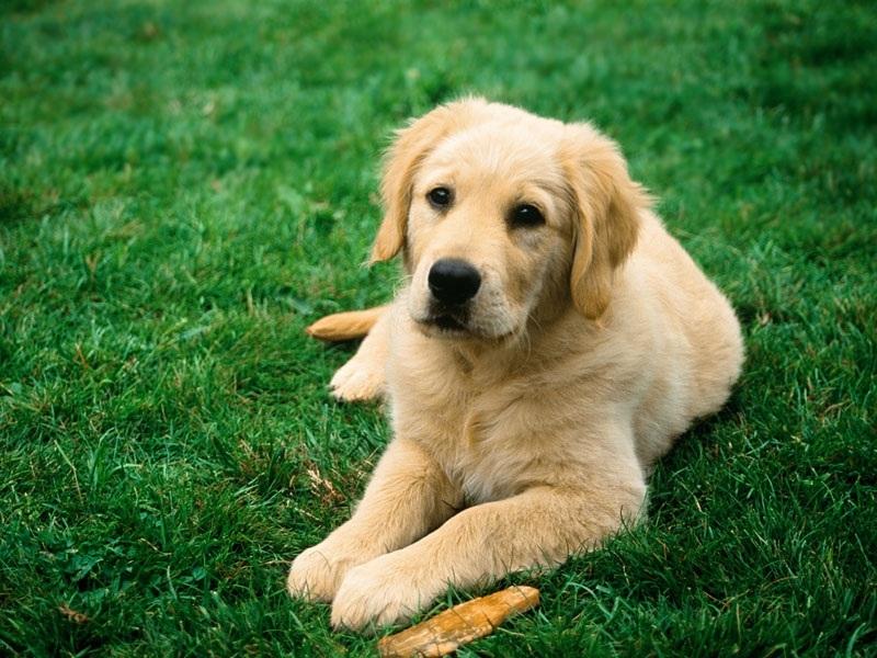 То, что сделал муж соседки с собакой и чем это закончилось — стоит вашего внимания!