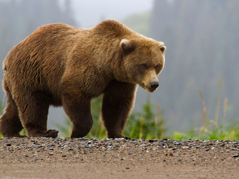 Эта весёлая история про мужиков и медведя рассмешила всех!