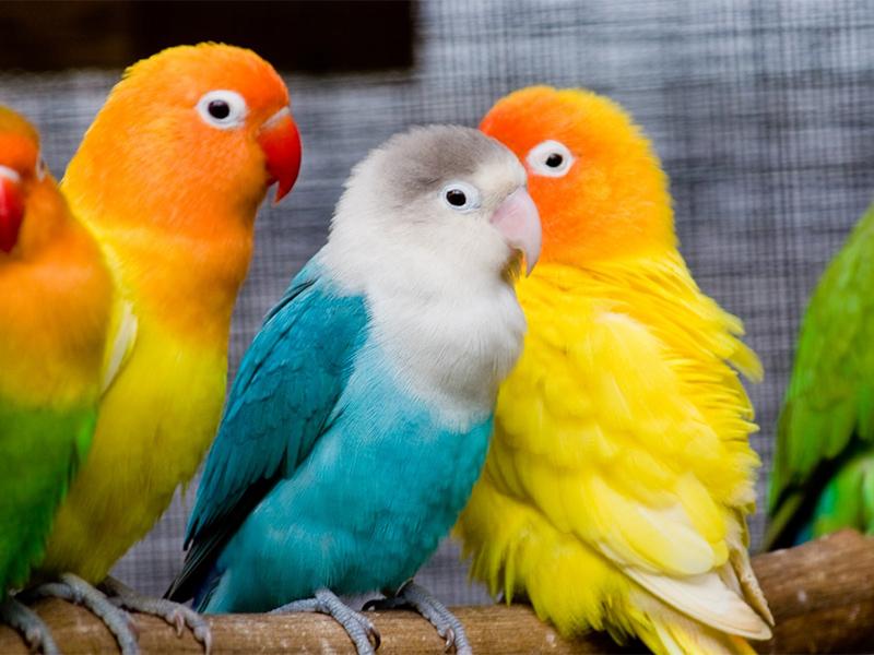 То, как поступил ветеринар с попугаем, не задумываясь об этом — нечто!