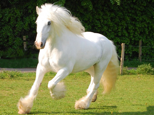 Он хотел купить лошадь, но владелец сказал это. Причина просто уморительно!