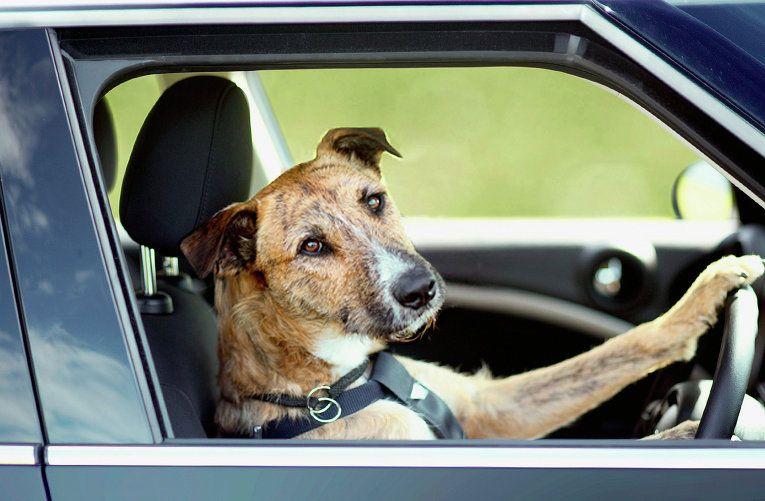 Он увидел, как собака умирает в горячей машине. То, что он сделал, чтобы спасти ее – гениально!