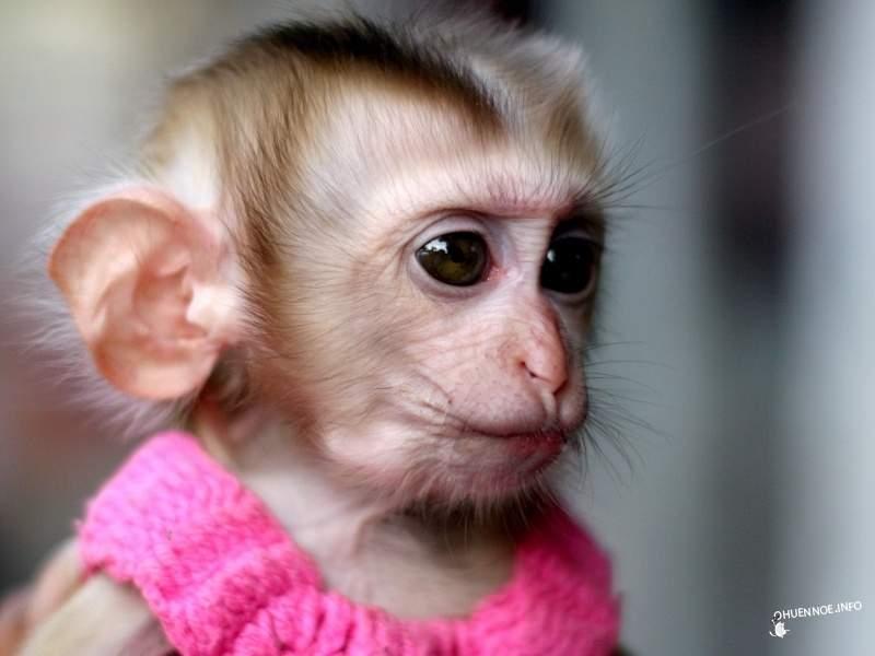 Слегка подзаработал на очень привередливой обезьянке!