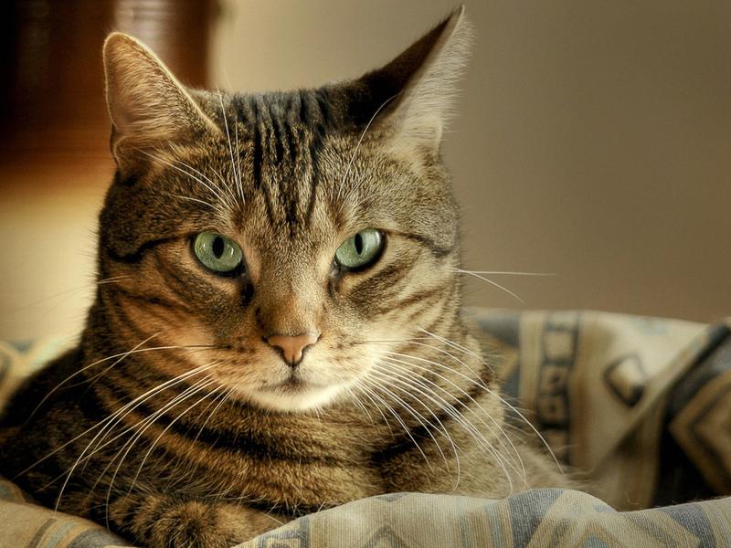Умный кот придумал очень интересную стратегию!