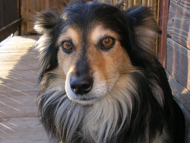 Мужчина увидел объявление о продаже этой невероятной собаки. Но узнайте, почему она стоила всего 10 долларов!