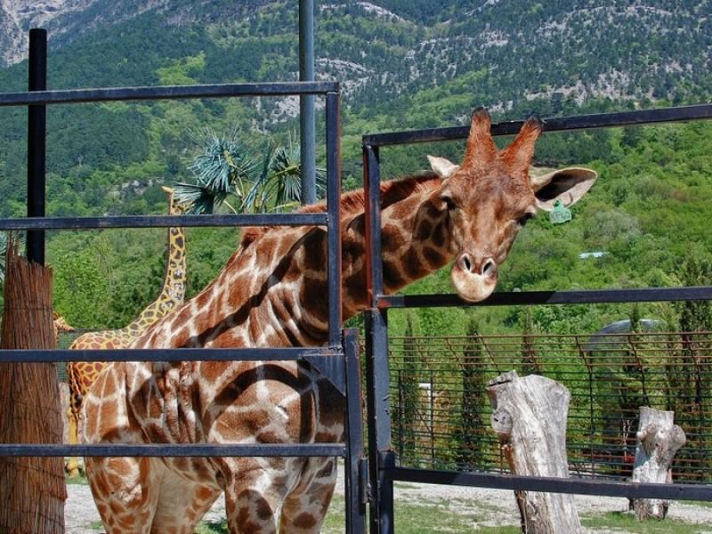 Такого, посещая зоопарк, ребята точно не ожидали!
