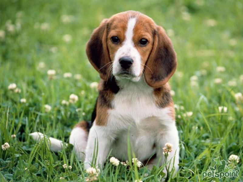 Ещё раз доказывает, что собаки очень добрые существа!
