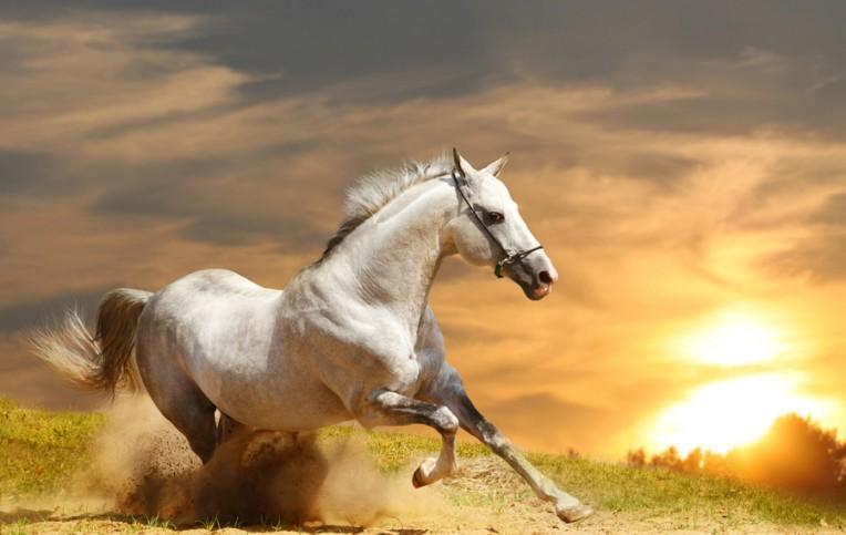 Он хотел купить лошадь, но владелец был против. Причина — просто золото!