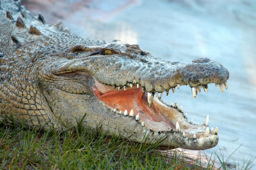 Женщина отчаянно хотела себе ботинки из кожи аллигатора, но что она сделала для этого – уморительно!