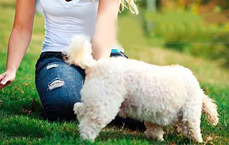 Она гуляла с собакой, и этот парень начал кричать на нее. Но потом она сделала это!
