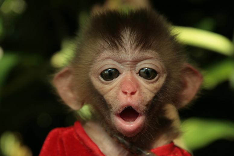 Ручная обезьянка продолжала вести себя как сумасшедшая, пока не произошел этот веселый момент!