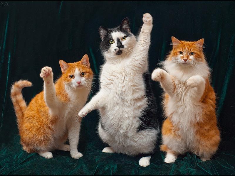 Это была настоящая семейная кошачья драма! Улыбнись!
