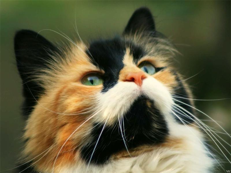 Кошки на самом деле очень понимающие существа! :)