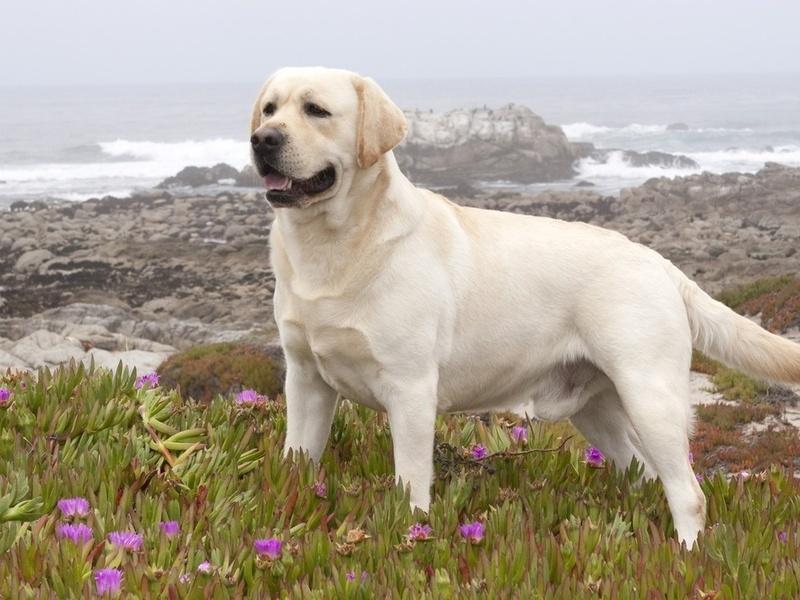 Собаке в итоге поставили очень странный диагноз! :)