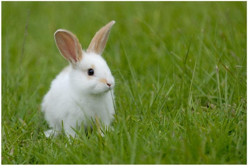 Слепые лесные животные, нуждались в помощи друг друга, но заявление кролика – убийственно!