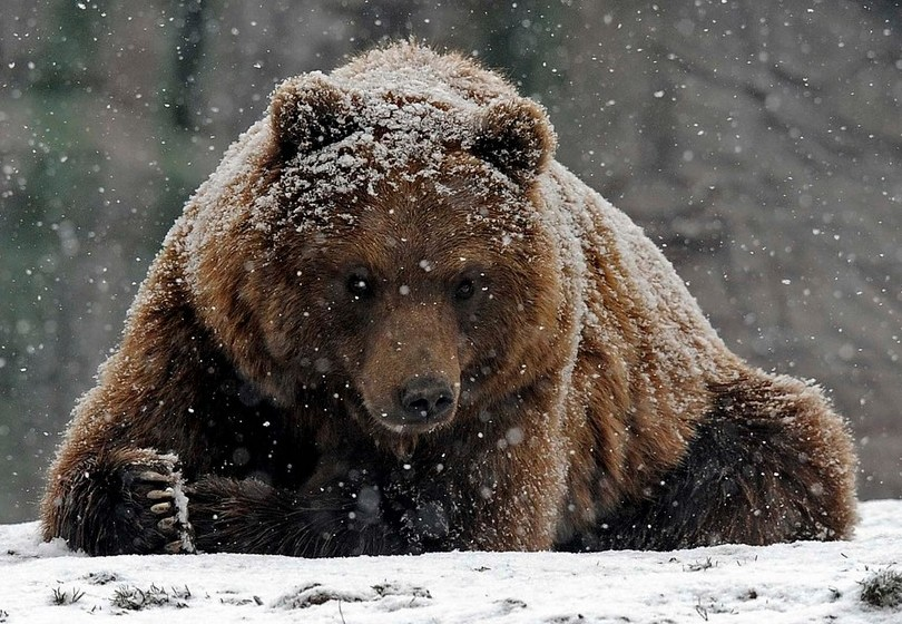 Охотник молился, чтобы ему удалось спастись от медведя, преследующего его, но тогда с ним происходит это!