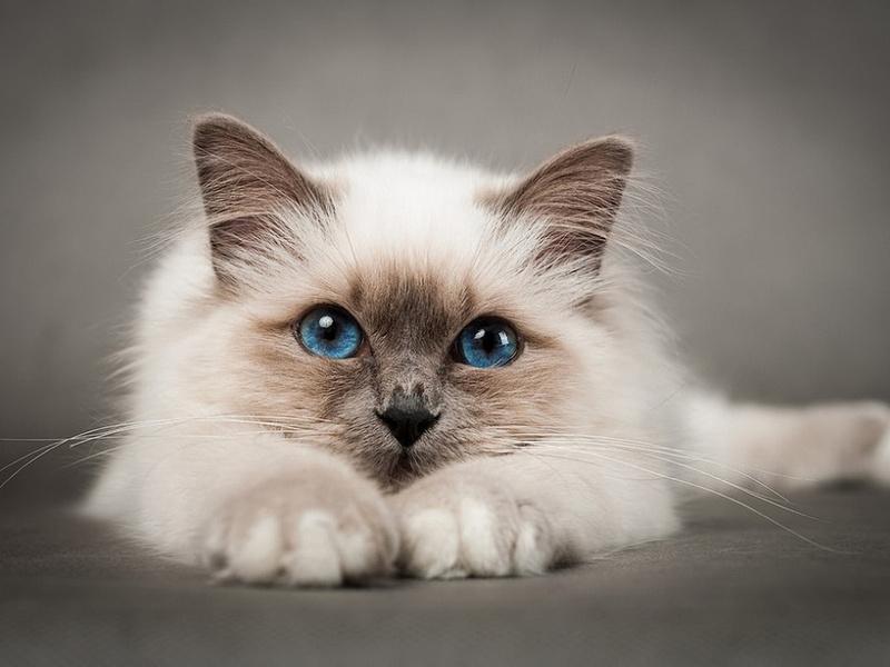 Котик настойчиво решил остаться у себя дома!