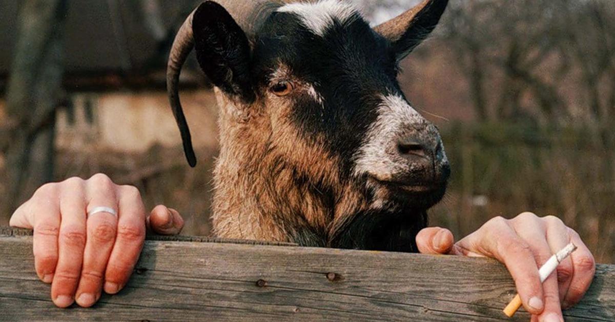 """Итак, милые женщины, разрешите представиться, я — козел! Или один из """"тех самых козлов"""", если вам будет угодно…"""