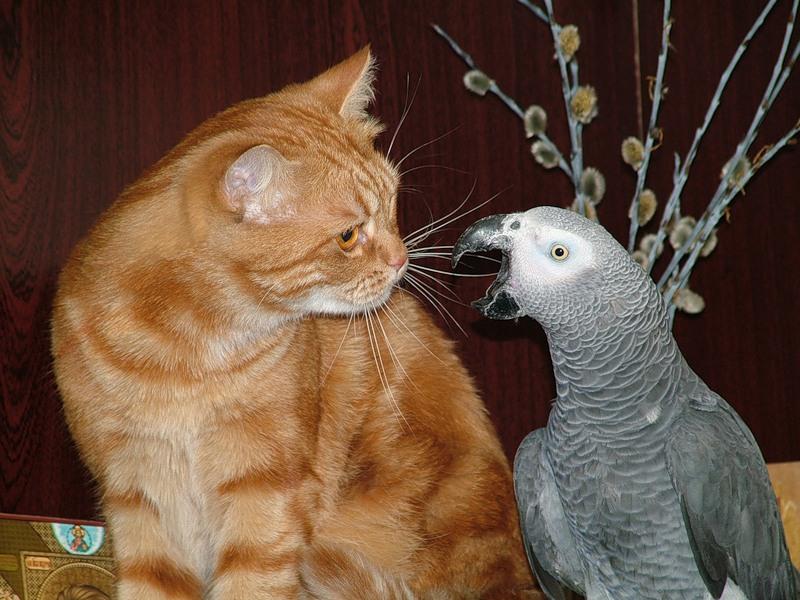 Этот попугай точно знает, что сказать наглому коту! Улыбнись!