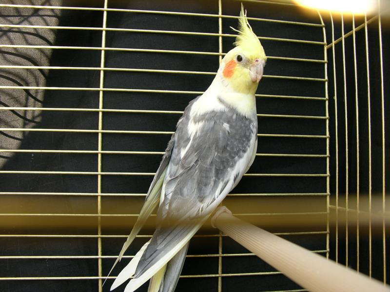 Даже неговорящие попугаи могут заговорить, была бы веская причина!