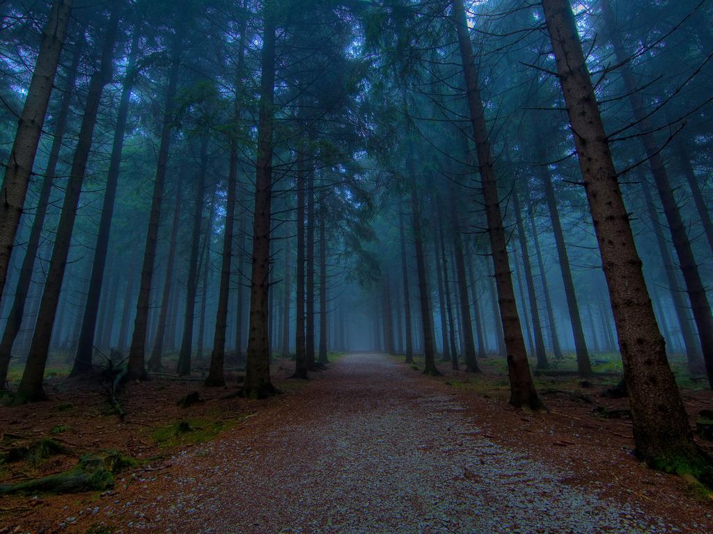 Атеист шел по лесу, но он даже не догадывался, какая беда его ждет впереди!