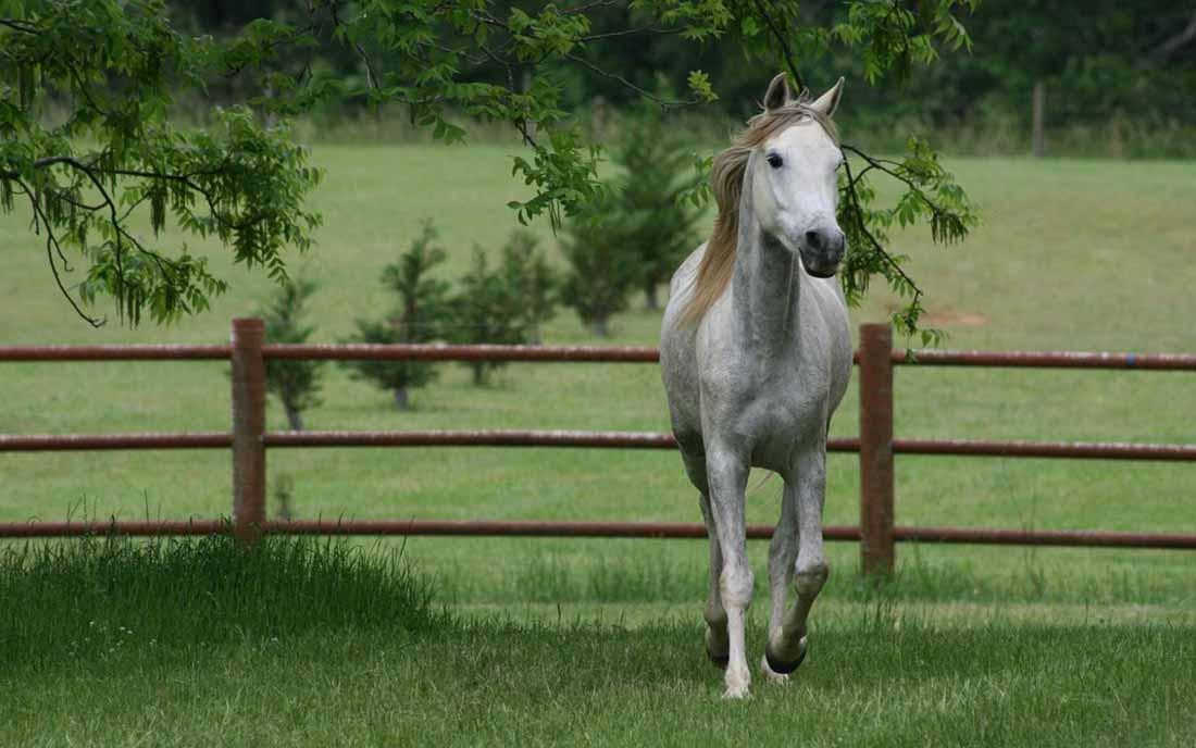 Он хотел купить лошадь, но владелец был против. Причина просто золото!