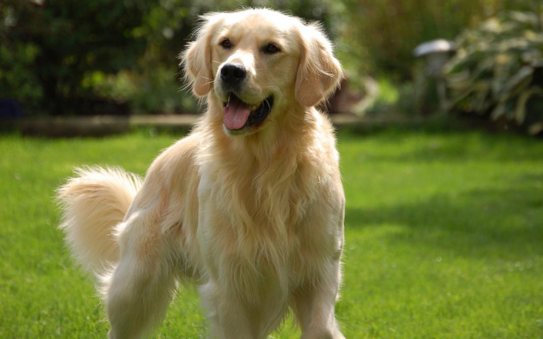 Женщина изо всех сил пытается остаться в живых, но то, что делает ее собака, чтобы помочь хозяйке – невероятно!