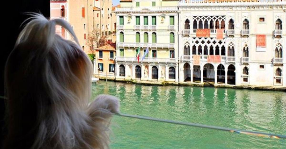 Ради такого вида на Венецию, я сам готов есть хоть самый дешевый собачий корм…