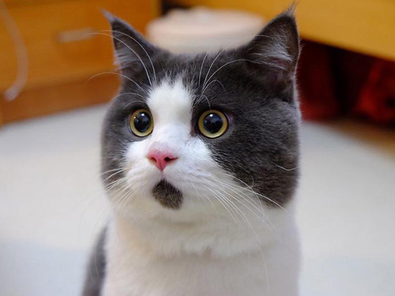 Такого избалованного кота вы вряд ли где-то встречали!