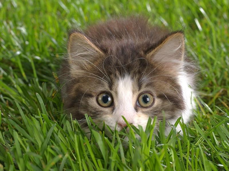 Реакцию кота на действия хозяйки вас умилят!