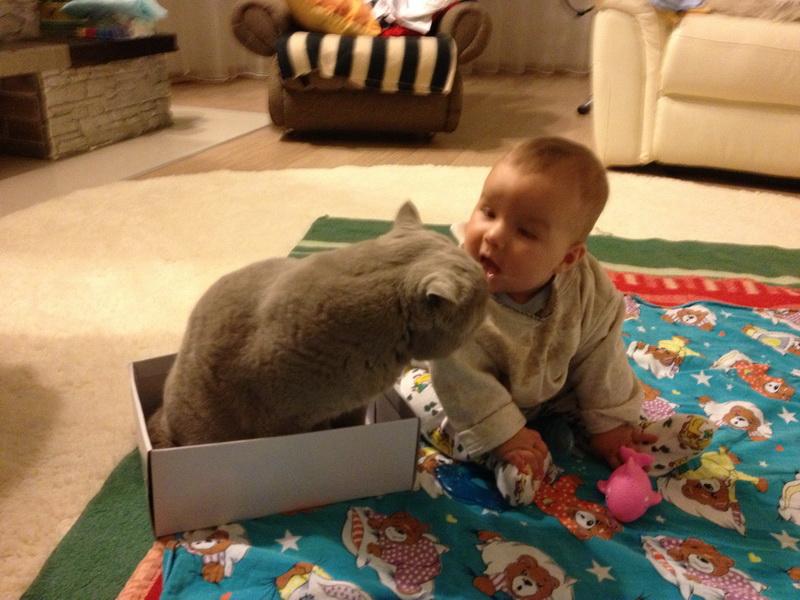 Такого воспитательного процесса от кота никто не ожидал!