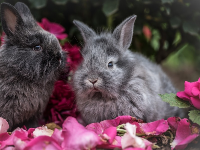 Кролик выдался уж точно не из простых!