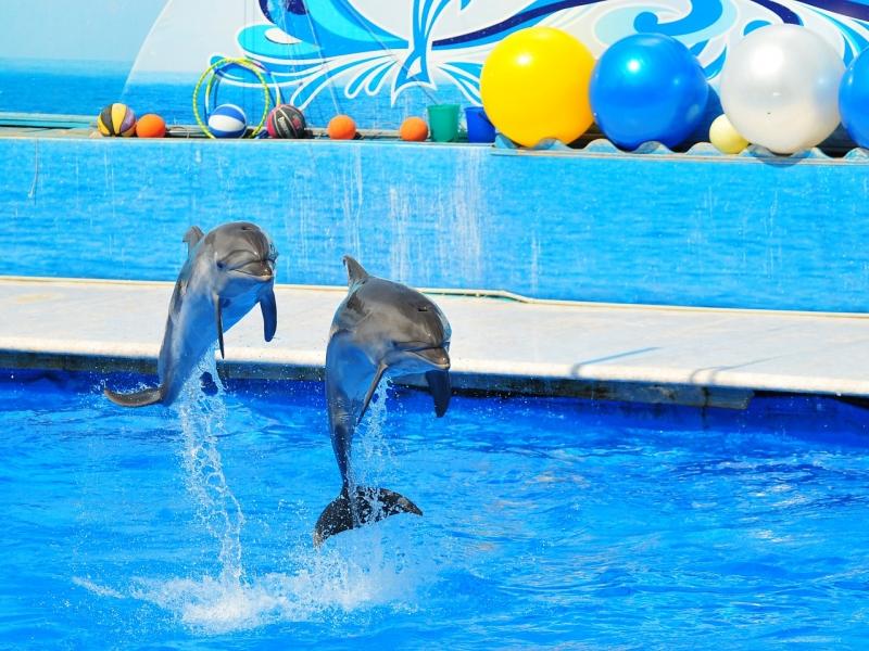 Дельфины действительно ведут себя прямо как люди!
