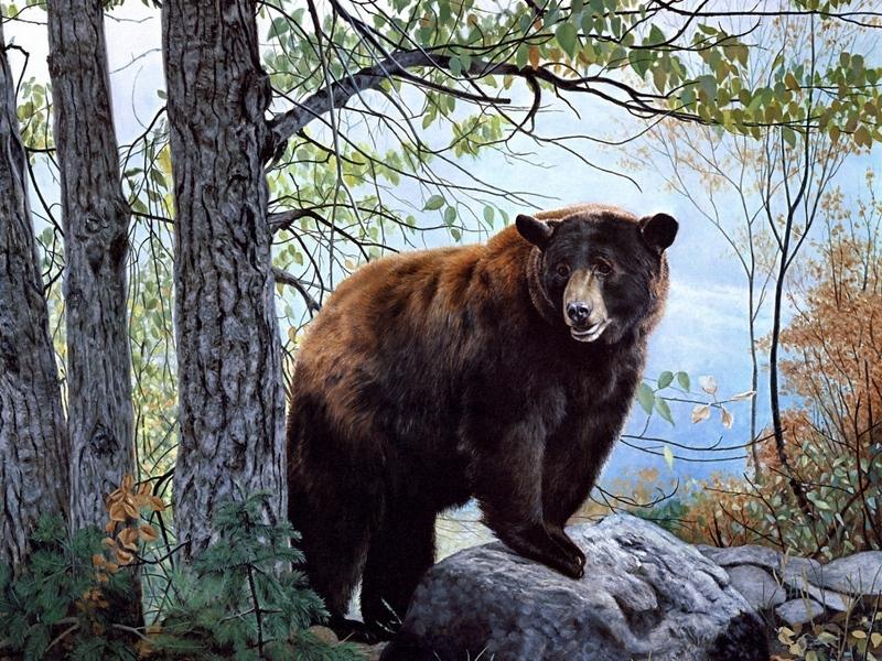 Такой реакции от медведя никто не ожидал!
