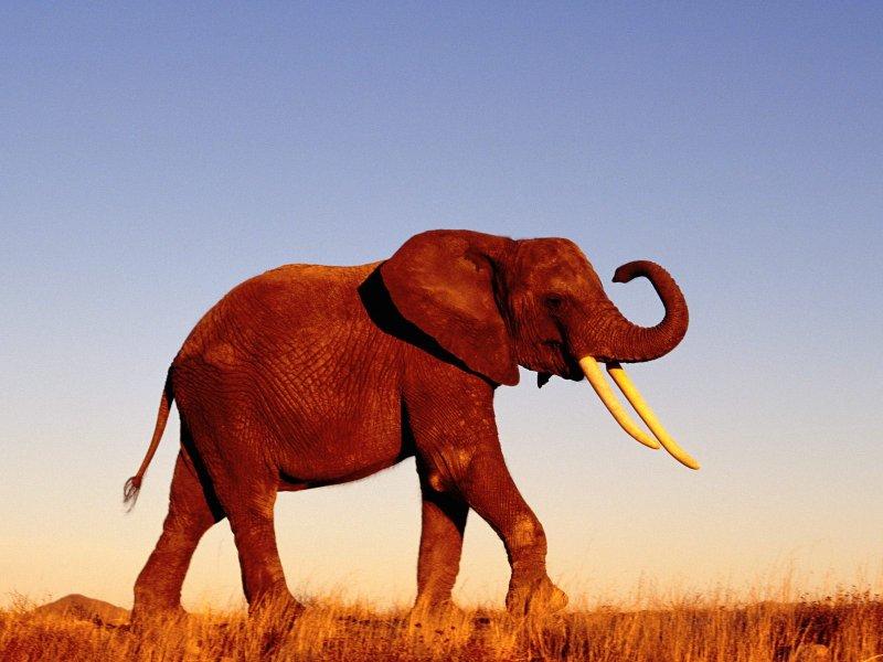 Да уж, слоник выдался очень хорошим!