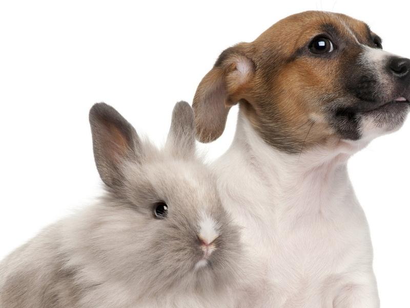 Владелец собаки запаниковал, когда его пес принес мертвого соседского кролика в зубах. Итог истории – это нечто!