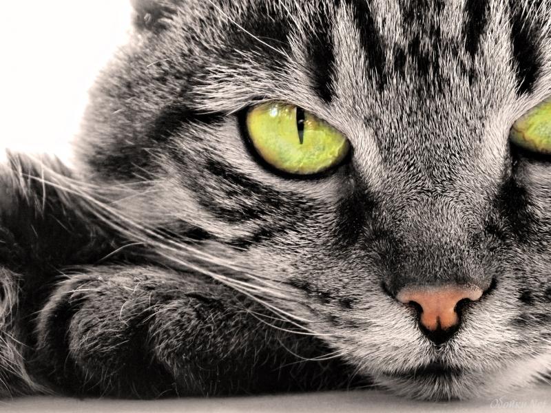 А вы бы хотели себе такой подарок от котика?!