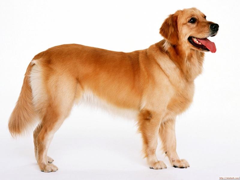 Интересно, что побудило собаку к такой доброте?!