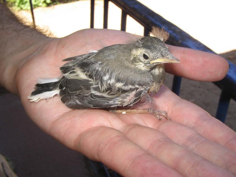 Мама спасла маленькую птичку, только посмотри, чем все закончилось!