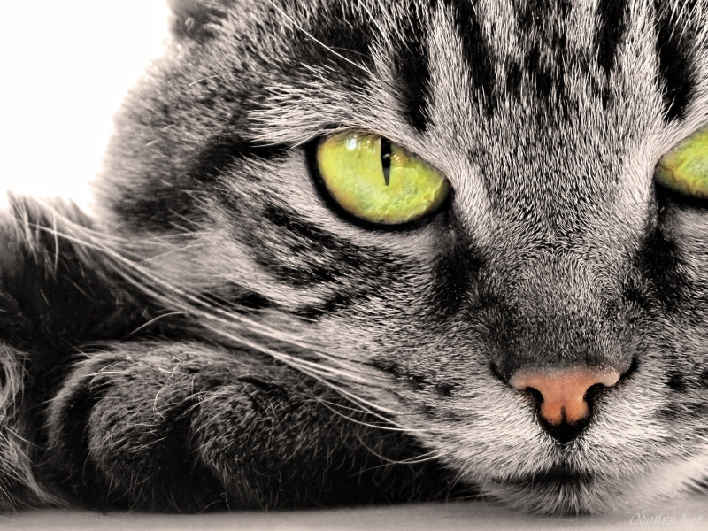 Кот всё-таки не изменил своему дому! :)