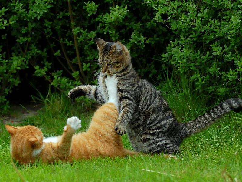 Вот такие вот завелись интересные коты!