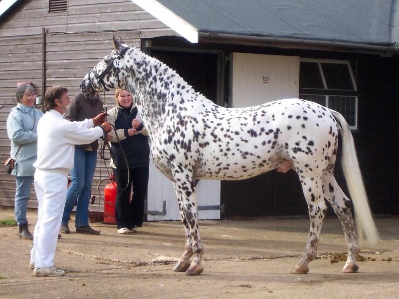 Мальчик пришел на аукцион лошадей с папой. Дальнейший их диалог точно стоит прочесть!