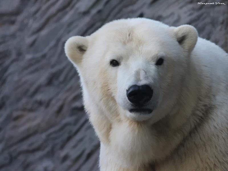 Медведь расстроился, когда увидел у мужчины…