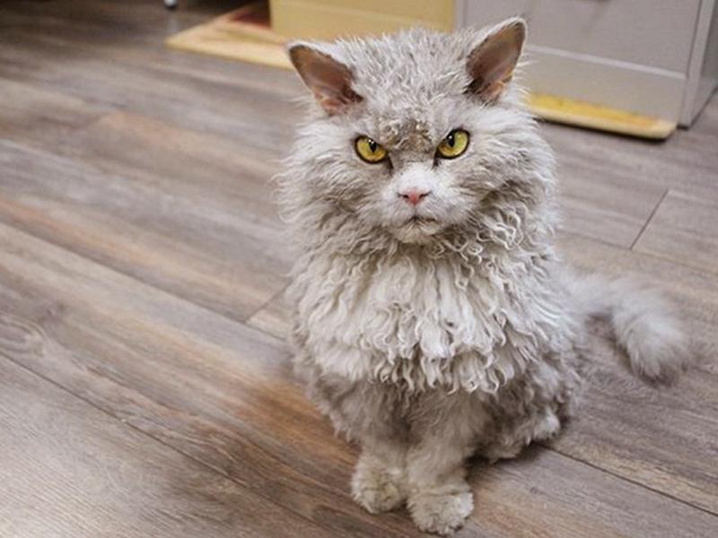 После появления кота мужчина сразу изменил своё мнение!