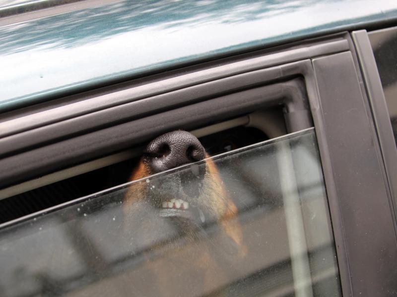 Он увидел собаку, умирающую в раскаленной машине. То, что он сделал дальше, чтобы спасти его, было гениально!