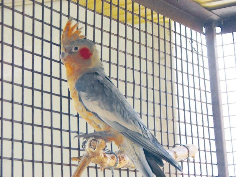 Этот попугай точно поднимет тебе настроение!